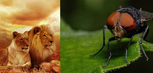 Seit der Löwe Cecil getötet wurde, nehmen die Menschen das Töten von Tieren nicht mehr auf die leichte Schulter – hier am Beispiel der Fliege Holger.
